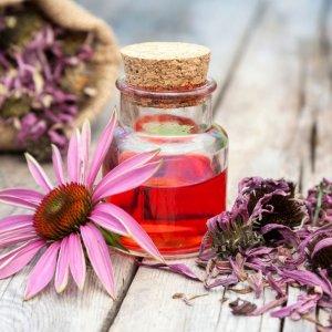 Эхинацея для укрепления иммунитета — как принимать настойку травы