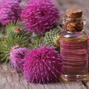 Чем полезно масло расторопши: польза масла, как принимать масло расторопши, вред и противопоказания